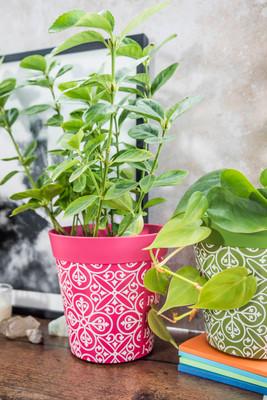 Gardening Trends 2021