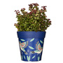 blue hummingbird medium 22cm indoor/outdoor pot