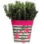 pink hibiscus stripe medium 22cm indoor/outdoor pot