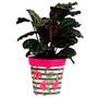 pink 'hibiscus stripe' large 25cm indoor/outdoor pot