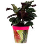pink 'palm repeat' large 25cm indoor/outdoor pot