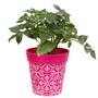 Pink plastic 'Maroc Tile' medium 22cm outdoor/indoor pot
