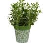 Green plastic 'Maroc Tile' medium 22cm outdoor/indoor pot