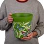 Set of 3 green Butterfly Palm,  indoor/outdoor pots 22cm x 22cm