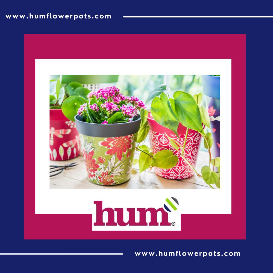 hum flowerpots facebook