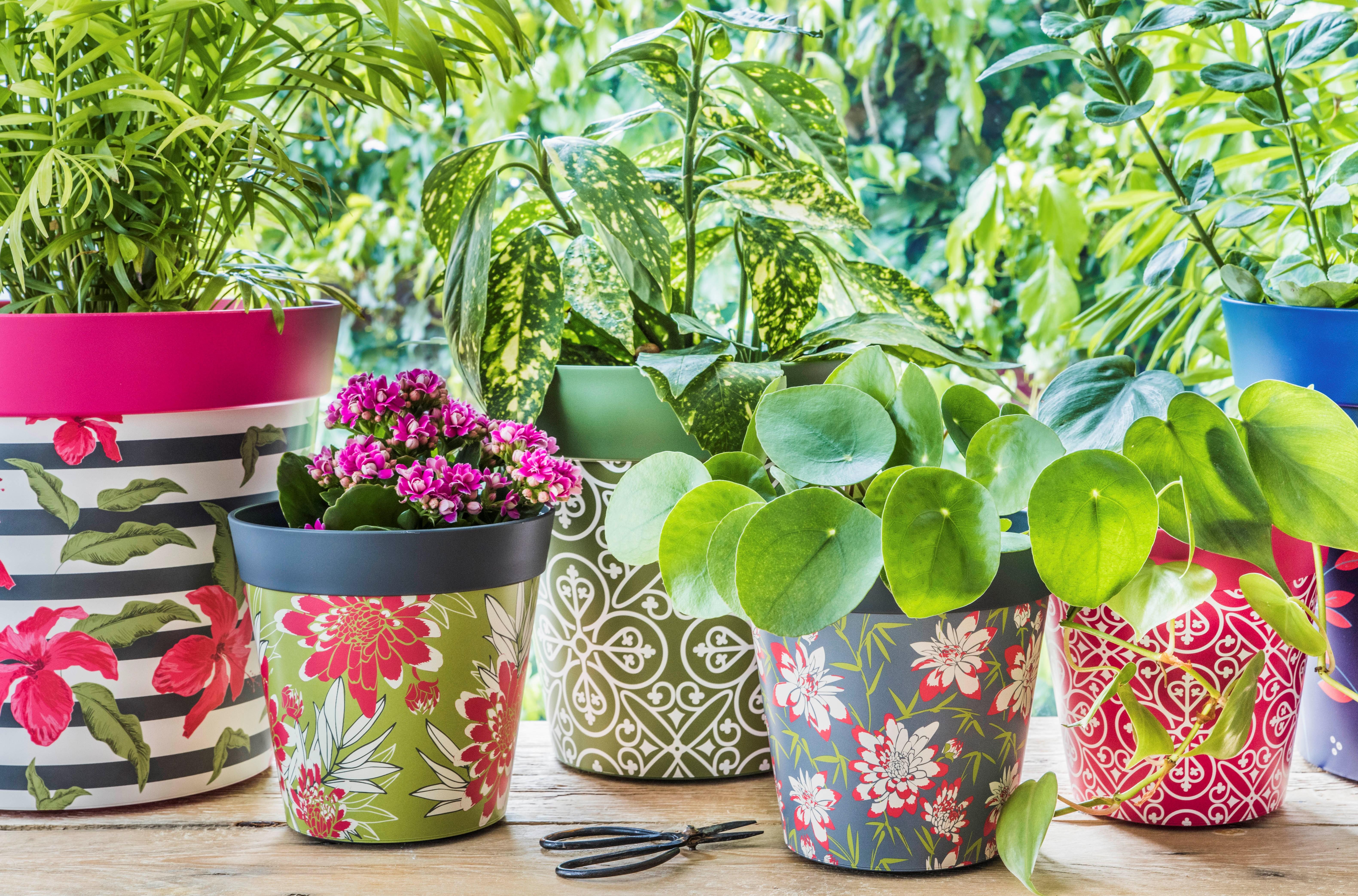 Hum flowerpots instagram