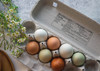 lifestyle image of open paper pulp egg carton filled with multicolor rainbow eggs