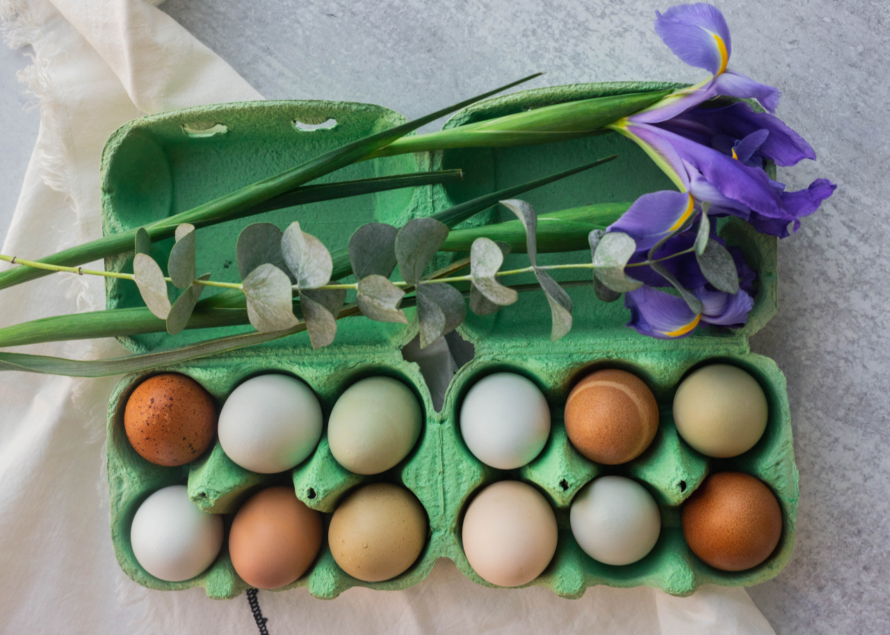 Grass Green iMagic2® Max - 6-Egg Super Jumbo Flat Top-Paper Pulp Carton opened and filled with multi-color eggs