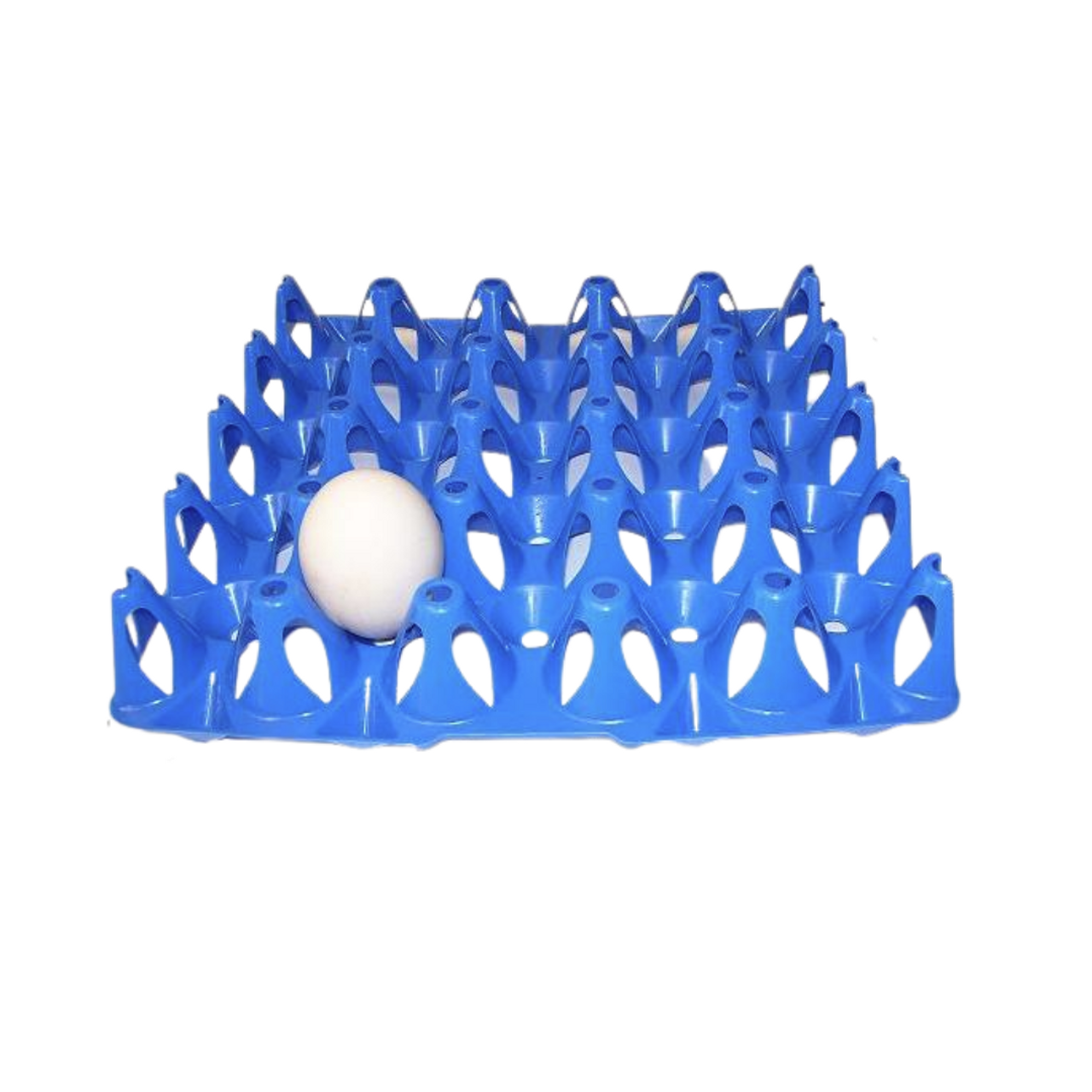 Turkey / Duck Vented Plastic 20-Egg Tray in blue.