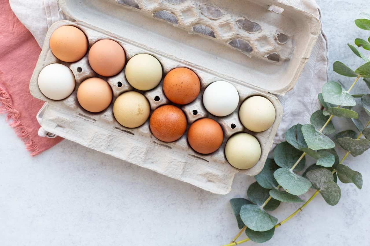 Open blank 12-Egg View Style Paper-Pulp Carton filled with multi-colored eggs and surrounded by green leafy plants