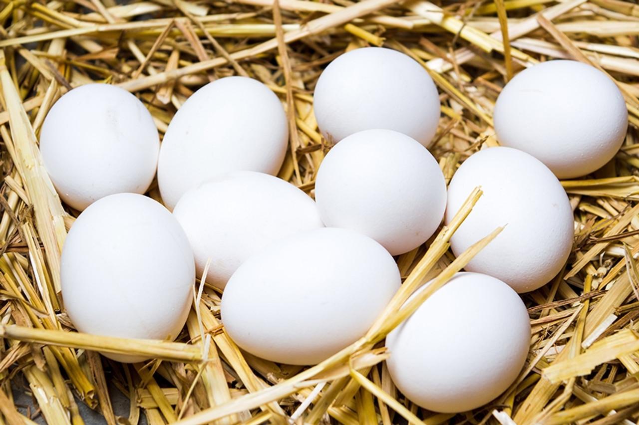 Ceramic Nest Eggs - White