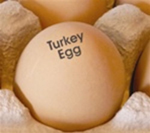 Turkey egg stamp on brown egg in paper pulp carton