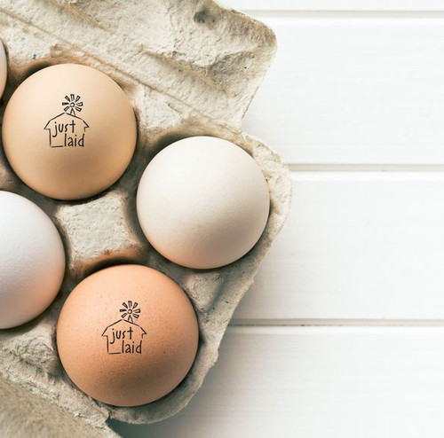 just laid barn egg stamp on multicolored eggs in a paper pulp carton