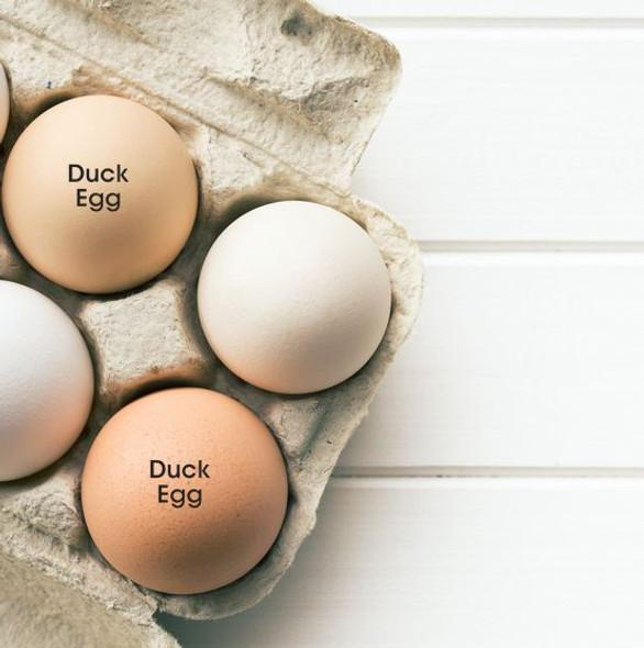 duck egg stamp TECS lifestyle image
