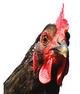 Corner Chicken