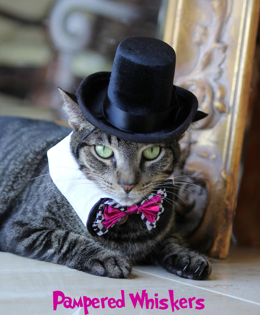 The Aristocrat Top Hat for cats