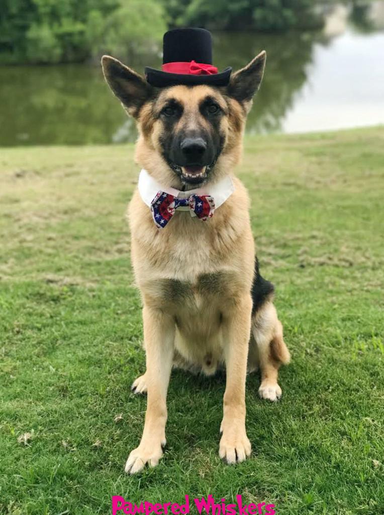 Dog Top Hat