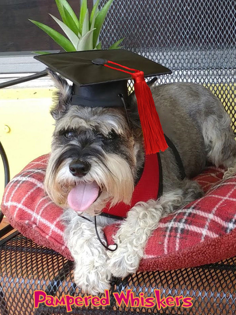 dog graduation cap with red tassel