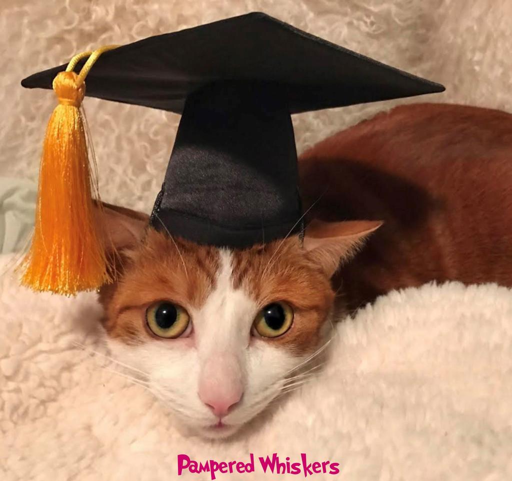 cat graduation cap