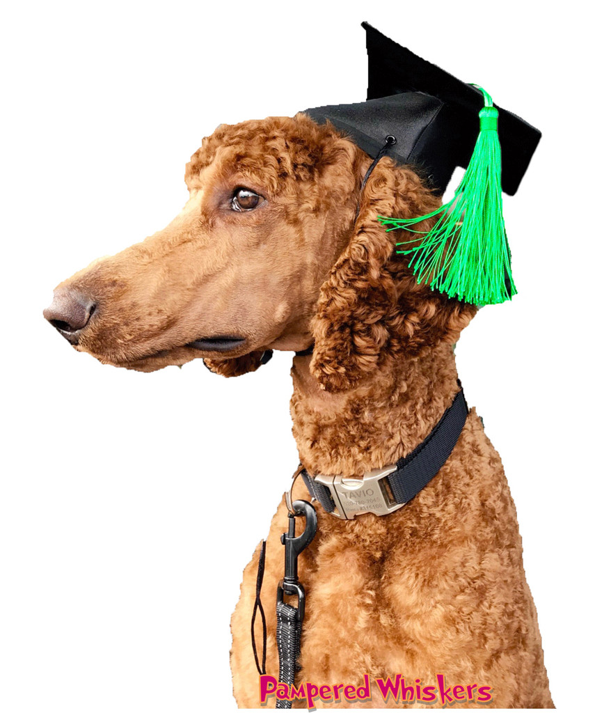 Dog Graduation Cap with green tassel