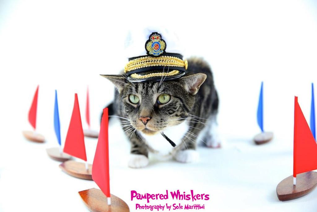 military cap for cat