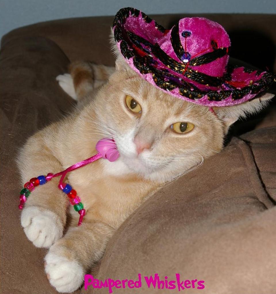 Fiesta Fuchsia sombrero for dogs and cats