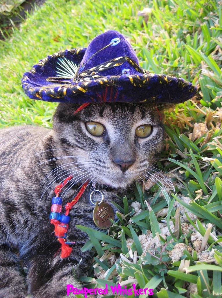 Pinata Purple sombrero for dogs and cats