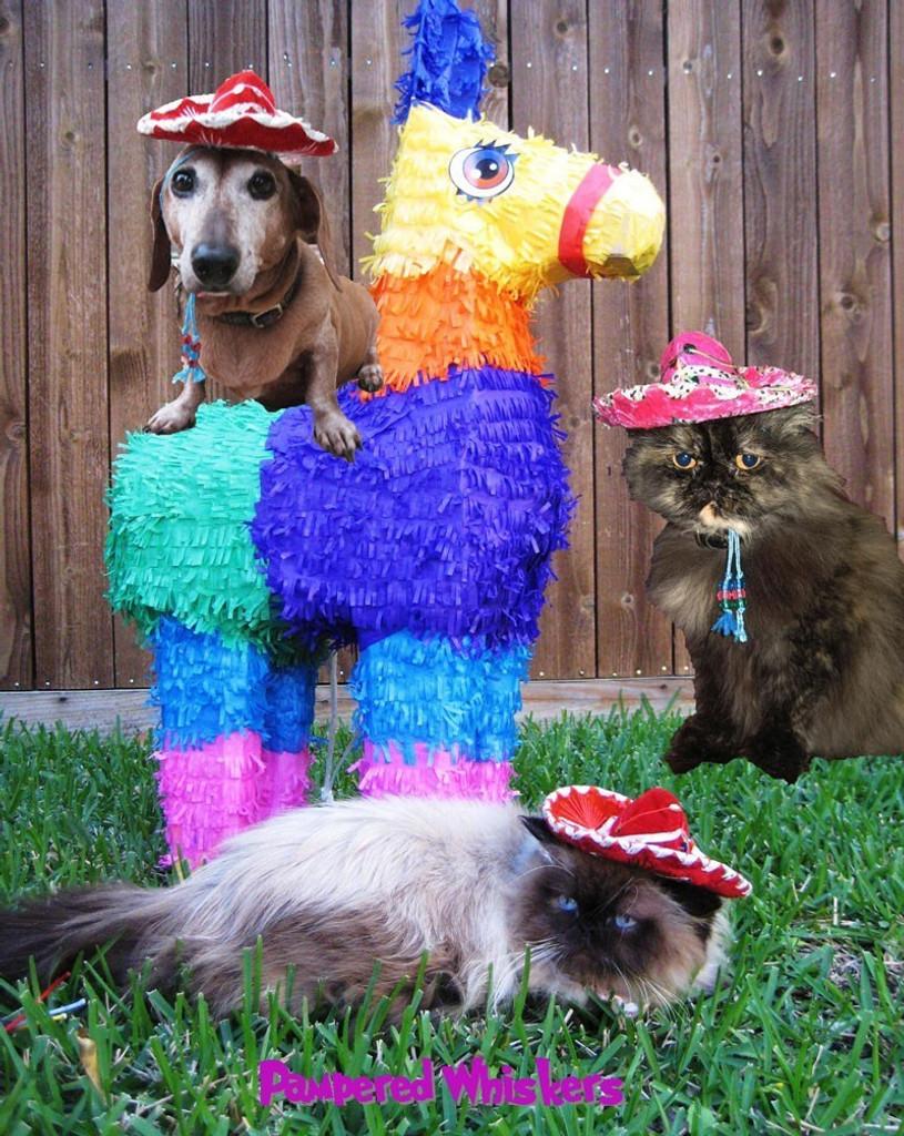 Buckaroo Banzai sombrero for dogs and cats