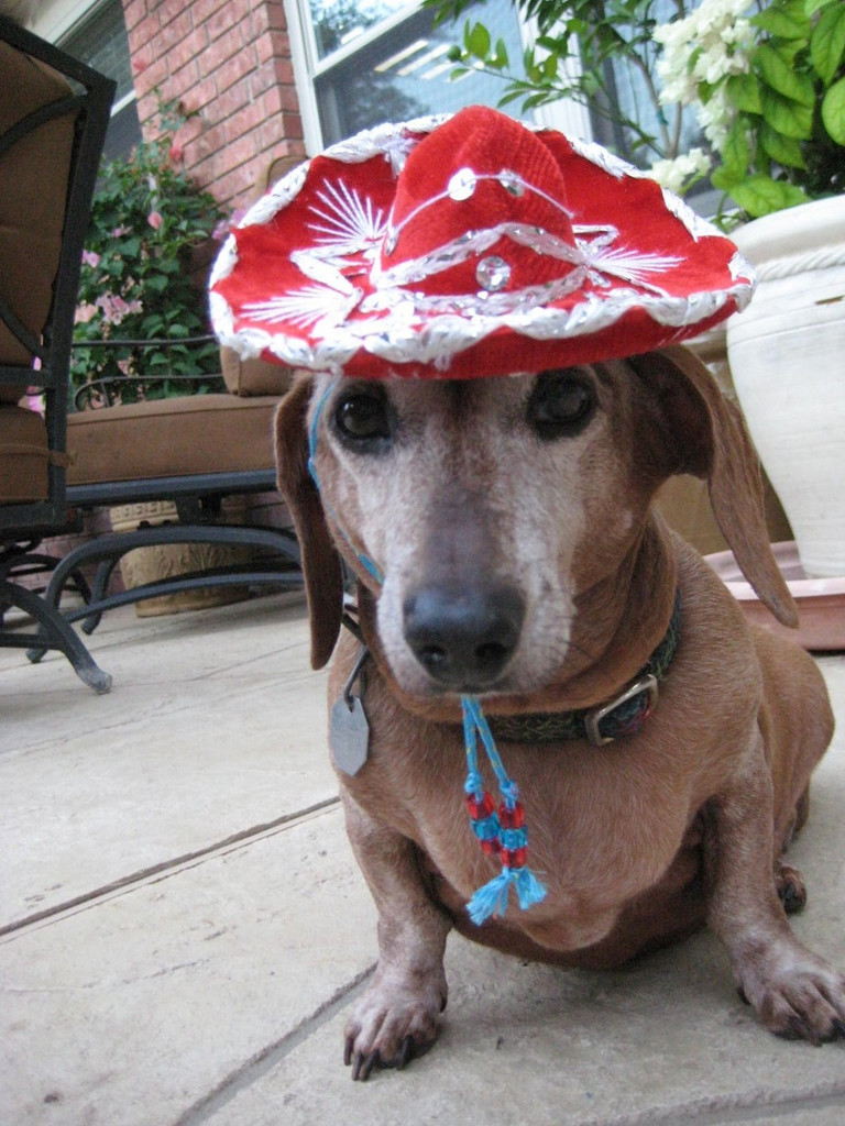 Rodeo Red sombrero for dogs and cats