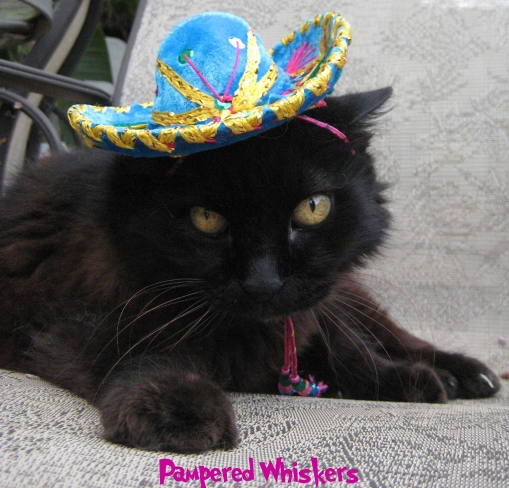 Turquoise sombrero for cats and dogs
