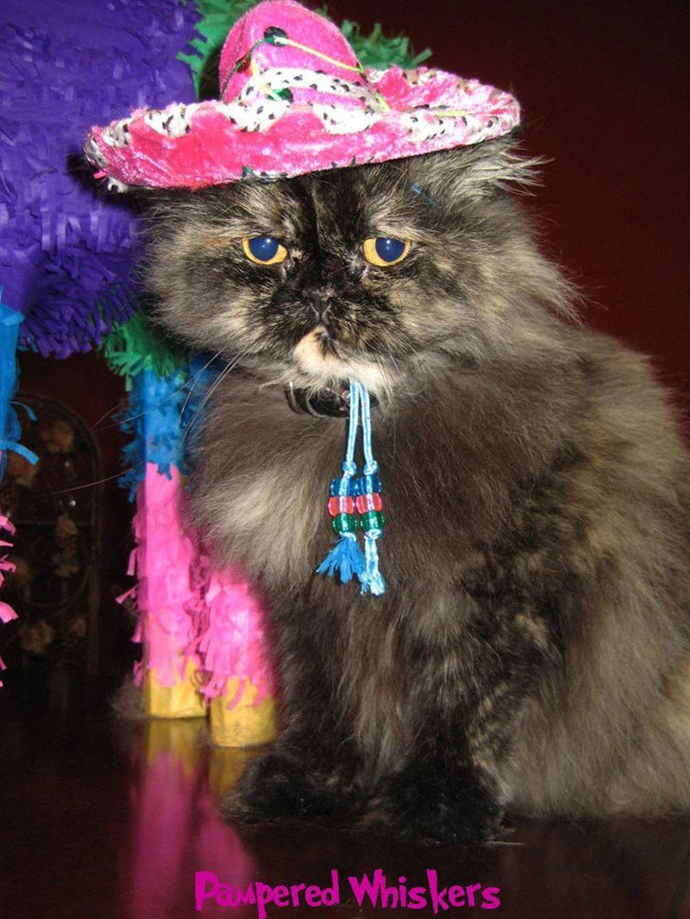 Fiesta Fuchsia sombrero for cats and dogs