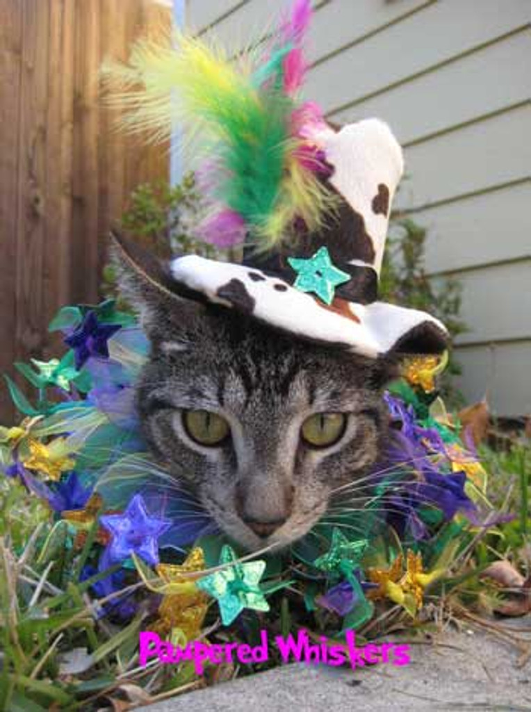 Mad Hatter Top Hat with Mardi Gras Mambo collar