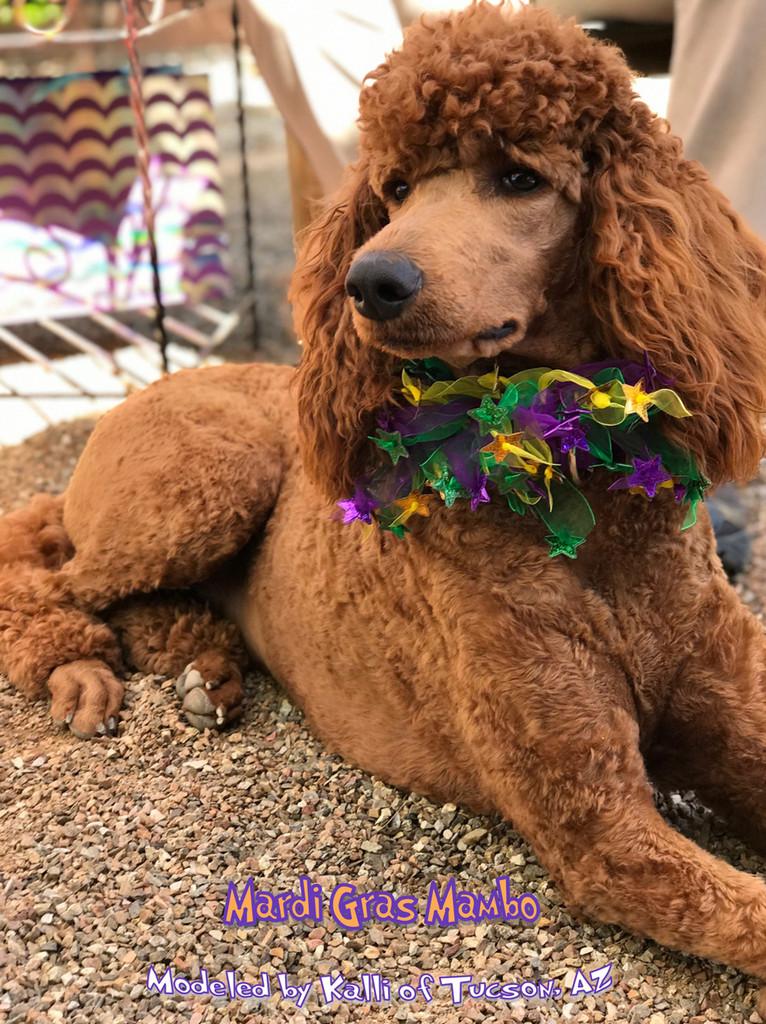 Dog Mardi Gras Party Collar