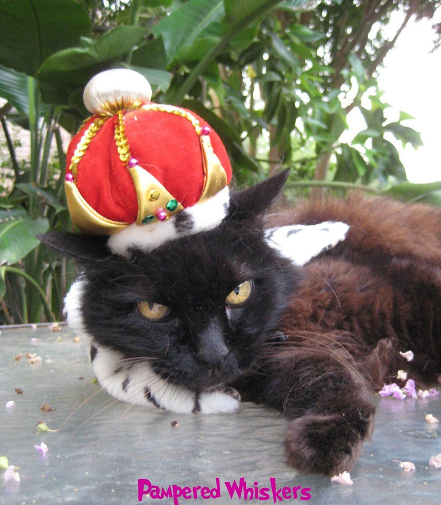 Crown for cats and dogs -The Crown Jewels