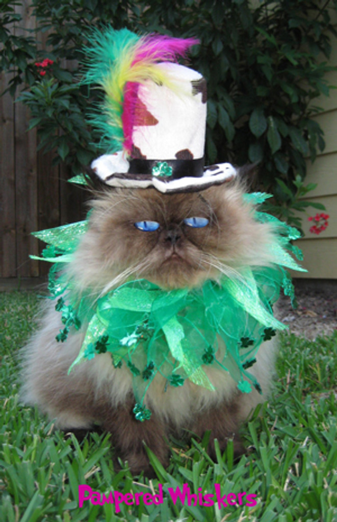 Shamrock cat hat with party collar