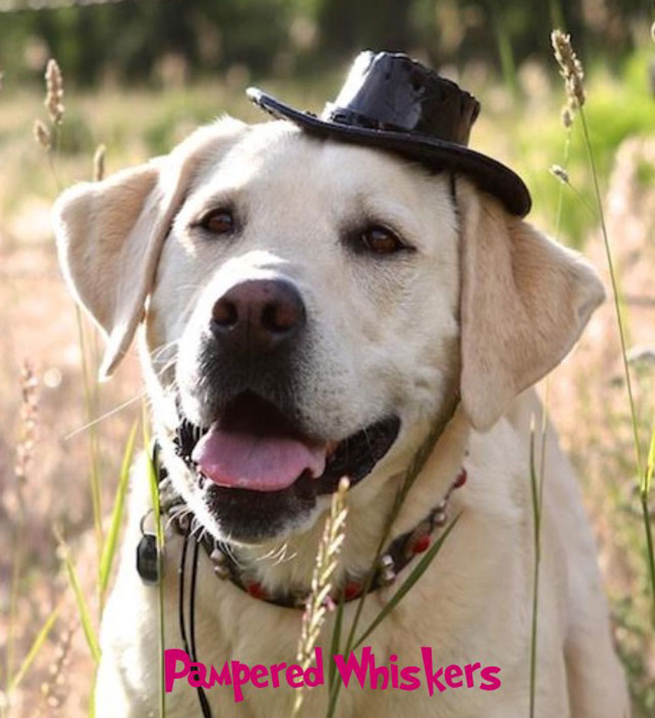 Black cowboy hat for dogs and cats.