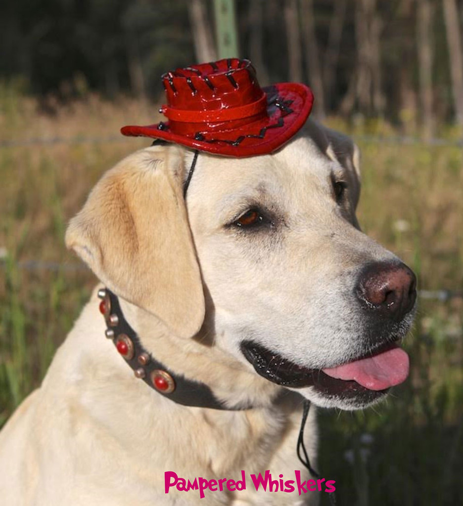 Red cowboy hat for dogs and cats.