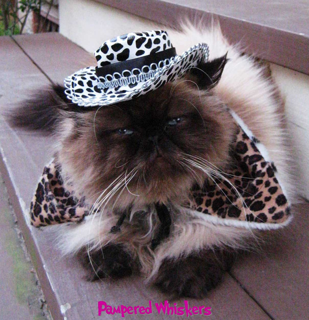 All Pimped Up Cowboy hat for cats with Wild Side reversible dalmatian and leopard print collar