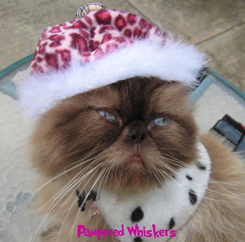 Wild Side Beret in Pink Panther