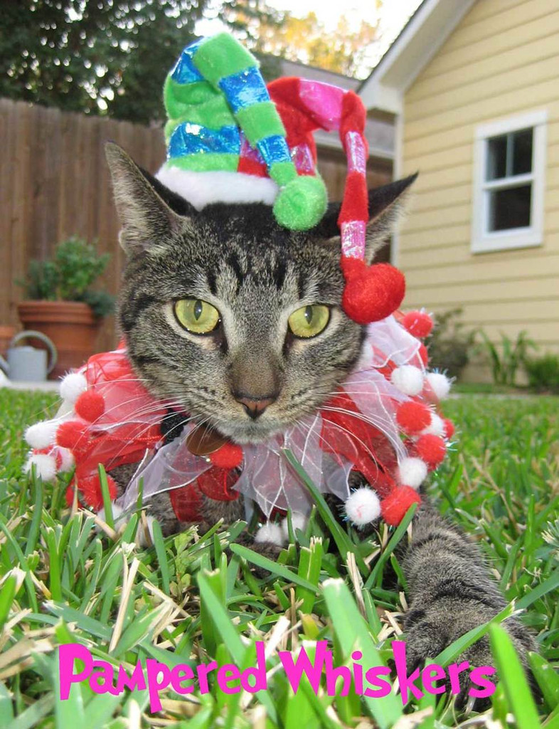 Jester Hat for cats and dogs with Candy Cane party collar