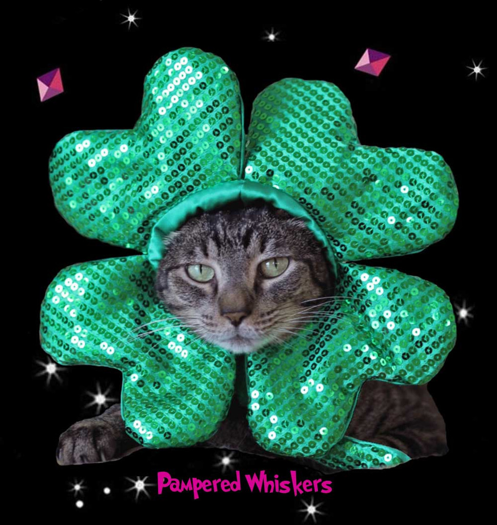 St Patrick's Day costume for cats