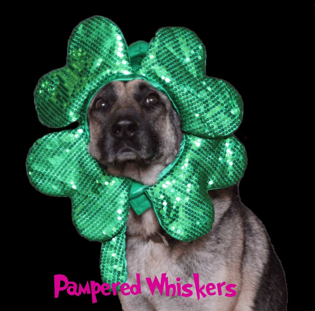 St Patrick's Day costume for dogs