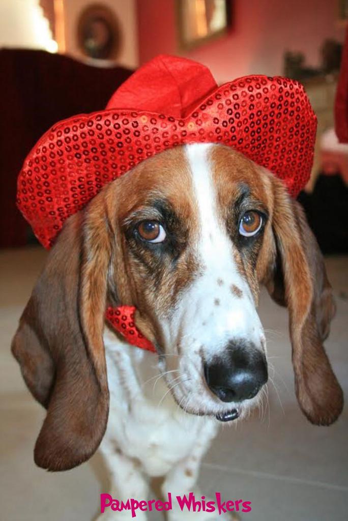 Valentine hat for dog