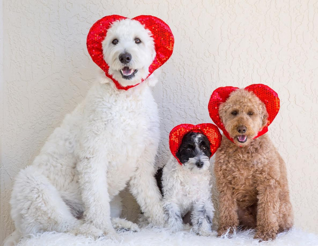 Valentine's Day Hat for Dogs & Cats