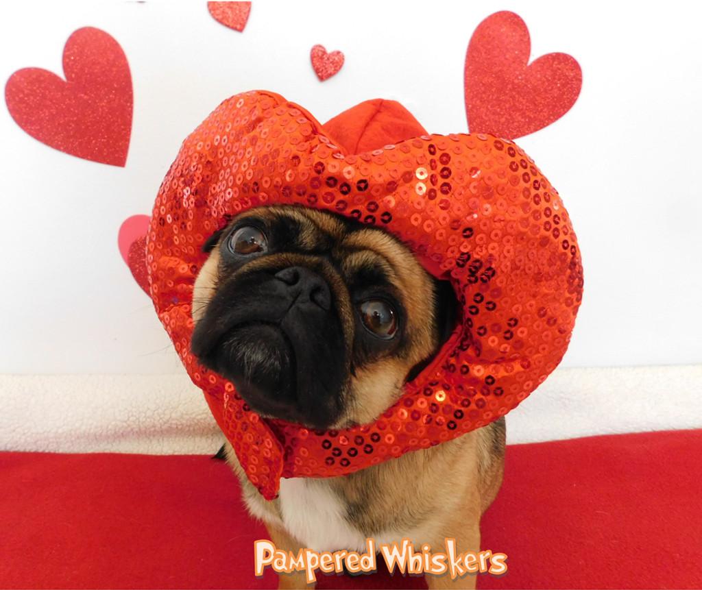Dog Valentine hat