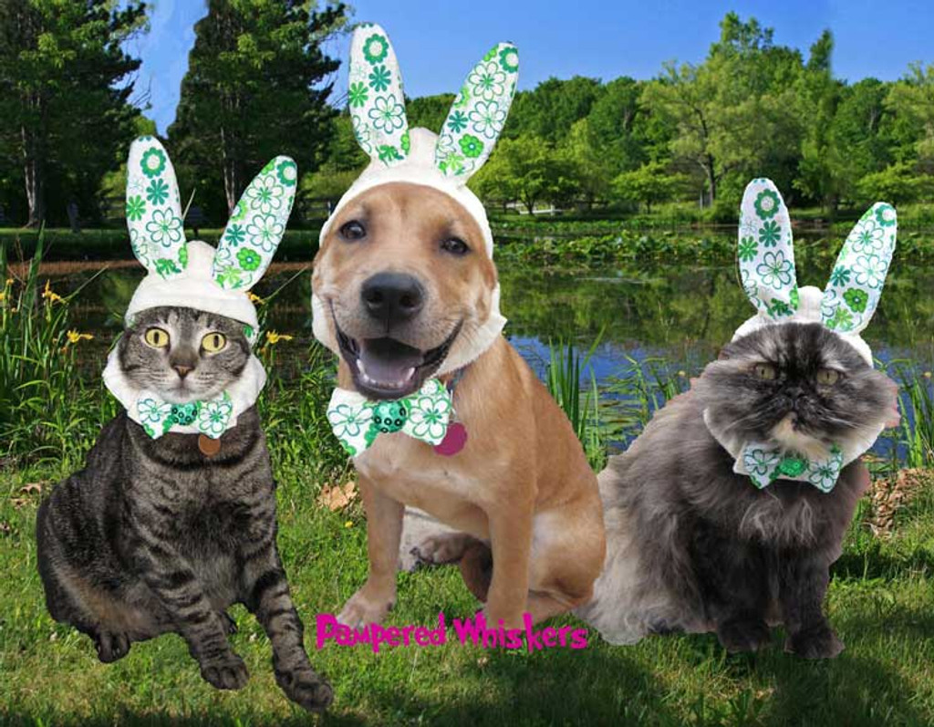 Rabbit ears for dogs and cats