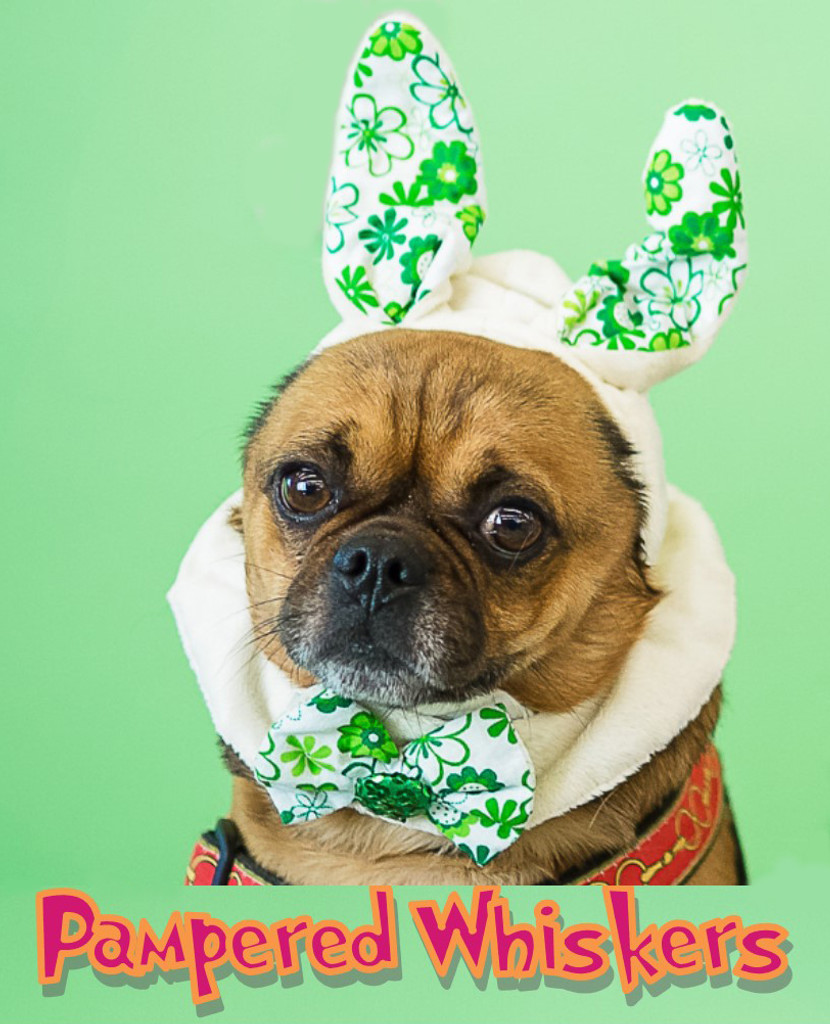 Rabbit Ears for dog