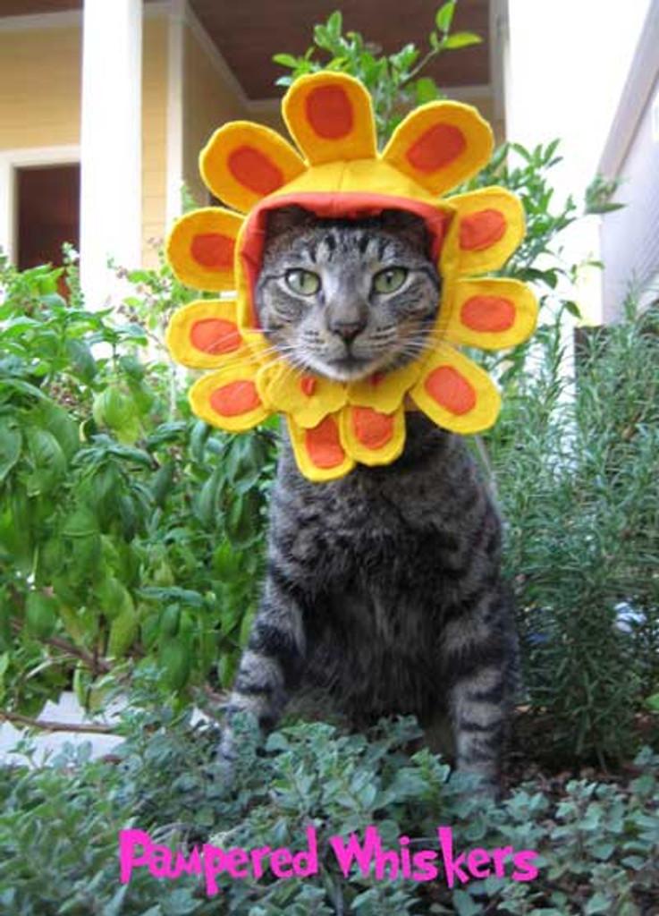 Sunflower hat for cat