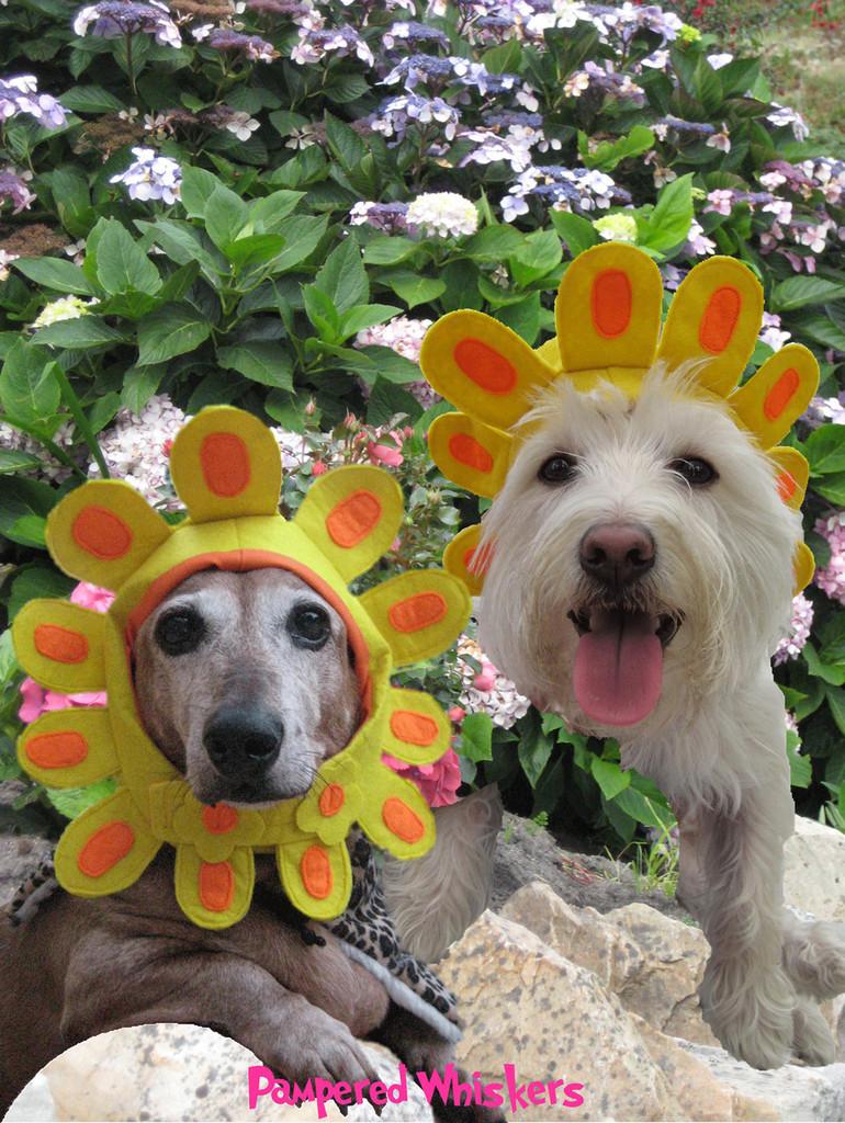 Dog Sunflower Costume