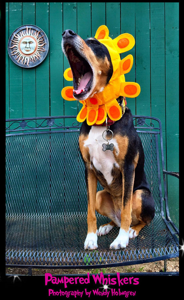 Sunflower Hat for dog